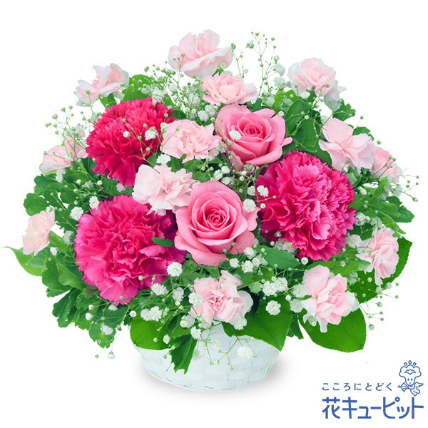 【お祝い】 花キューピットのピンクバラのアレンジメント 誕生日 退職 歓送迎 結婚 記念日 プレゼント yc00-511964