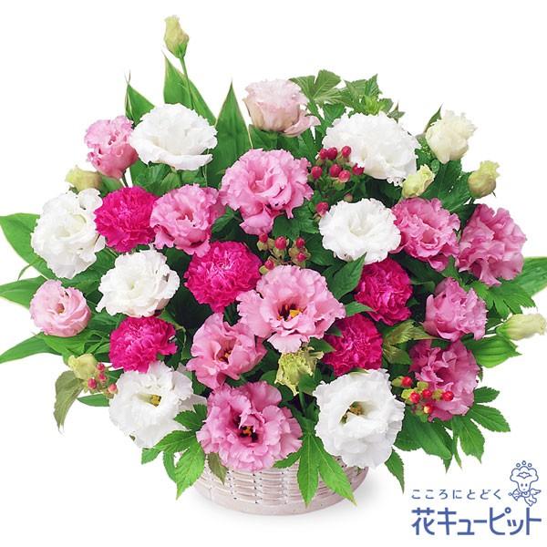 【出産祝い】 花キューピットの2色トルコキキョウのアレンジメント 花 ギフト お祝い プレゼントye00-511995