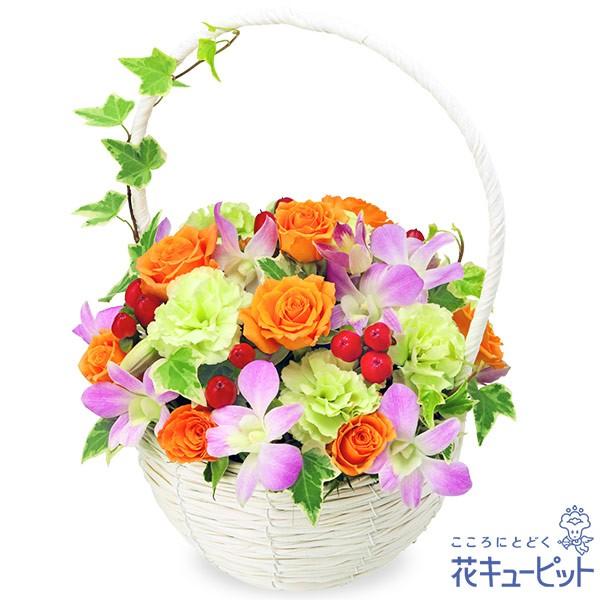 【退職祝い】 花キューピットのデンファレのナチュラルバスケット 花 ギフト お祝い プレゼントyi00-512107