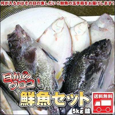 鮮魚セット 業務用 活 居酒屋 送料無料 北海道産 5kg ※沖縄送料別途加算