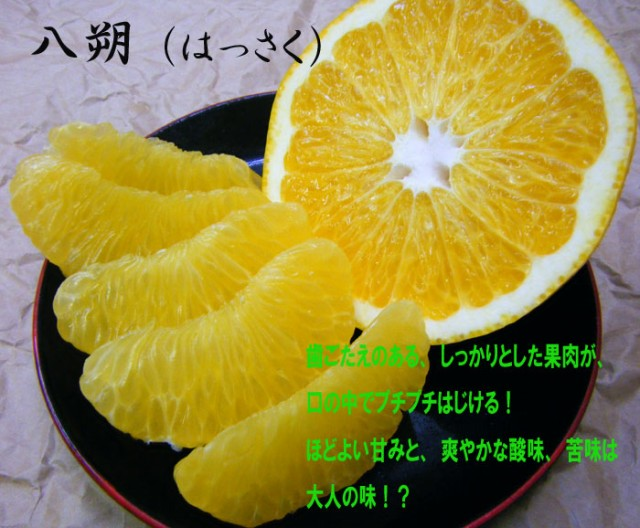 和歌山産 はっさく 大玉 5kg 3 480円【送料無料・一部地域除く】