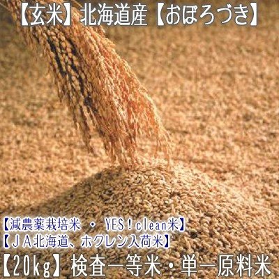 玄米【31年産 送料無料】北海道産 おぼろづき 20kg【一等米 10kg×2】北海道 農協 ホクレン入荷米なので安心安全【北海道米】【玄おぼ】