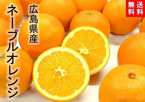 【送料無料】広島県産 ネーブルオレンジ 10kg Lサイズ 約45玉/尾道市瀬戸田町