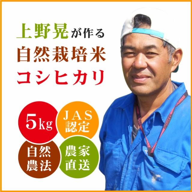 【自然の旨味たっぷり】上野晃が作る 自然栽培米 コシヒカリ 5kg 【送料無料 ※沖縄へは別途送料】 玄米 無農薬米 JAS 米 5キロ お米 5kg