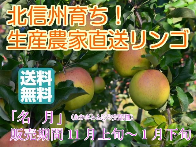 【信州産 訳ありリンゴ】フルーティーな甘味が特徴的で食べやすい!人気の黄色種りんご「名月」中級ランク 約9.5〜10kg(20〜40玉)【送