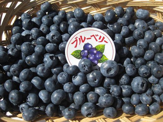 2021年産 長野県産 減農薬栽培で生食や加工品にも最適な「生ブルーベリー 約2kg箱」【送料無料(一部地域は有料)】