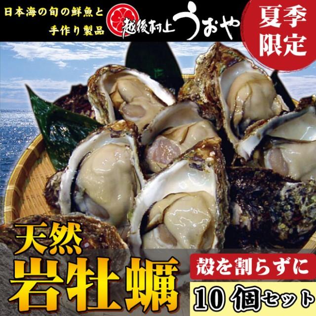 【日本海産】夏の味覚!天然岩牡蠣【10個セット】(殻を割らずに)/カキ/かき/お中元/生牡蠣/