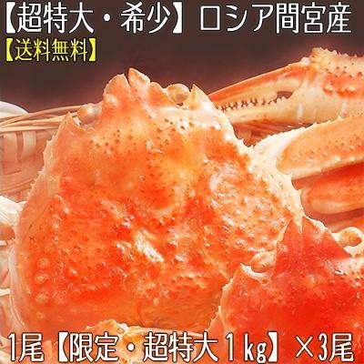 【送料無料】ロシア間宮産【超特大】ズワイガニ 姿 1kg×3尾。本当に大きく希少なサイズ、活蟹をボイル!北海道直送【z1】【z6】