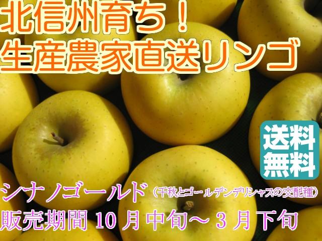 【送料無料】甘味と酸味の絶妙なハーモニー!リンゴ通の方に人気の「シナノゴールド」中級ランク 約5kg(10〜20玉)収穫&発送は10月中