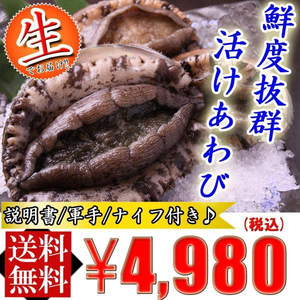 【送料無料】生でお届け 活けアワビ380gUP(4〜8個)【鮑あわび/貝/BBQ】...
