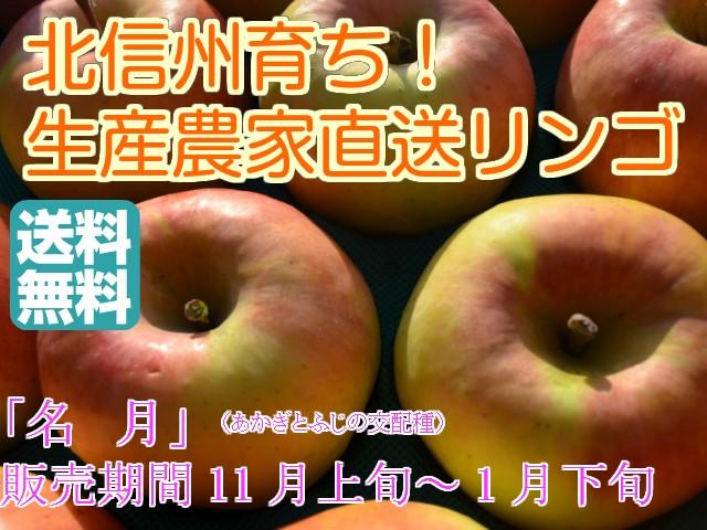 【信州産 訳ありリンゴ】フルーティーな甘味が特徴的で食べやすい!「名月」自家用ランク 約9.5〜10kg(20〜40玉) 【送料無料(一部地
