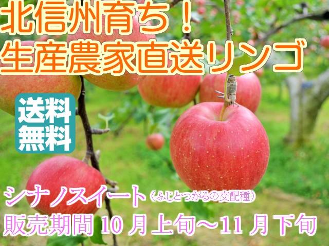 【訳ありリンゴ】信州産「ポケットサイズの小さ目シナノスイート」食べきり小玉サイズ約4.7〜5kg(18〜25玉)【送料無料(一部地域は有