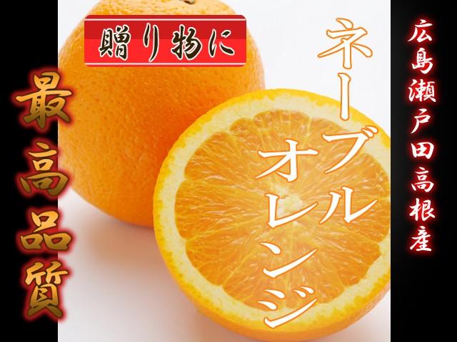 広島 瀬戸田 高根産 秀品 ネーブルオレンジ 10kg 送料無料 贈答用 ネーブルオレンジ ネーブル 秀品ネーブル