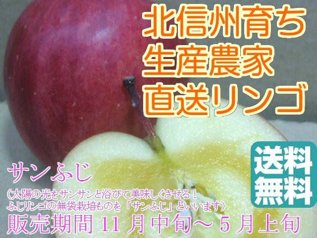 【訳ありリンゴ】太陽の味覚!無袋栽培の信州産「サンふじ」ご家庭向き 約9.5〜10kg箱 【送料無料(一部地域は有料)】11月25日頃より