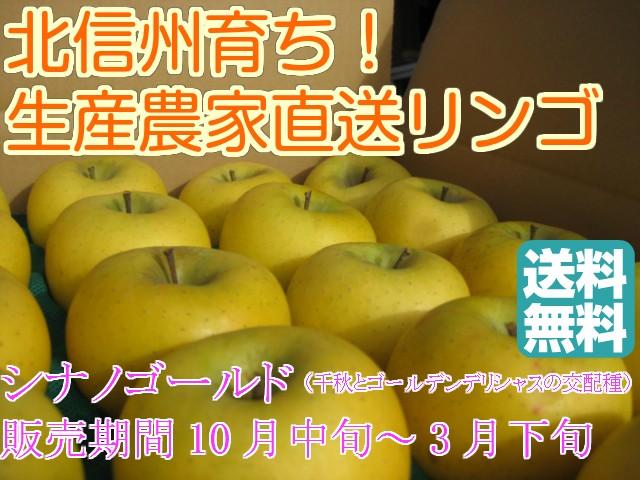信州産 甘味と酸味の絶妙なハーモニー!リンゴ通の方に人気の信州産「シナノゴールド」中級ランク 約2.7〜3kg(6〜12玉)【送料無料(