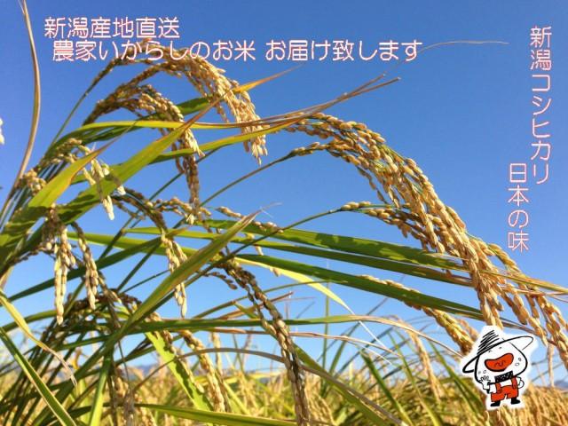 白いお米です R1新潟産新米コシヒカリ特上米 白米 5kg 送料無料(東京、神奈川、千葉、埼玉、栃木、茨木、群馬、山梨の方はこちらから)