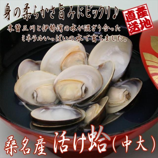 ハマグリ【中大】600g 三重県桑名産 活け蛤[贈り物 包装・熨斗対応]   [いなべ冷蔵]