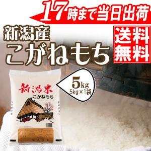 もち米 5kg 新潟産こがねもち 特別栽培米 令和元年産 送料無料