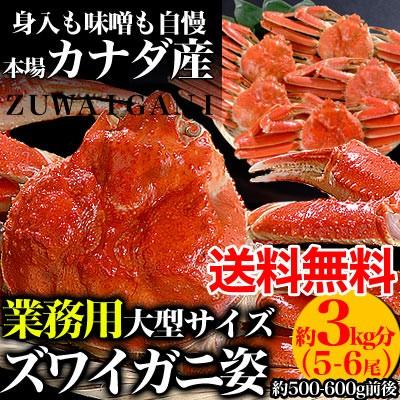【送料無料】【業務用】ズワイガニ姿3kg分5〜6尾身入り90%以上[ずわいがに蟹][味噌みそ]