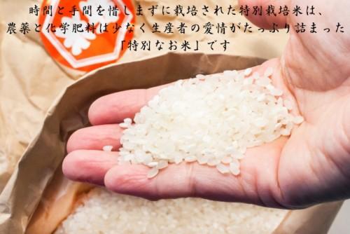 売り尽くし 米 30年産 30kg 送料無料 宮城県登米産 特別栽培米 ひとめぼれ 白米 30kg [5kg×6袋入り] 減農薬 減化学肥料 清流米ポリ袋仕