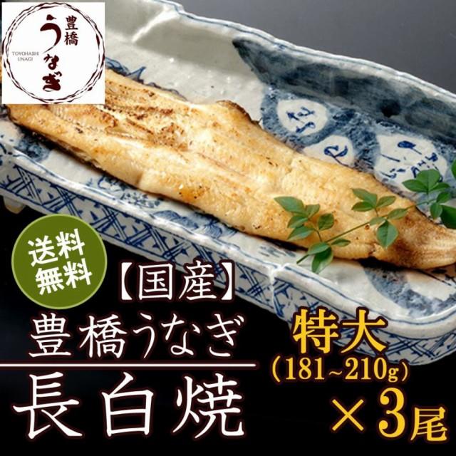 豊橋うなぎ白焼き 特大181-210g×3尾 約5人前 国産 ウナギ 鰻 送料無料