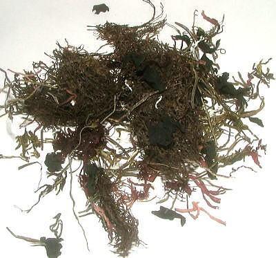 国産ねばり海藻サラダ 無添加食品 ダイエット 低カロリー 自然食品 ミネラル 海藻サラダ 海藻