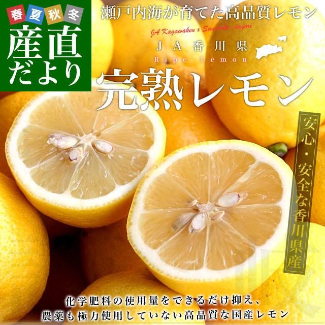 香川県から産地直送 JA香川県 完熟レモン 約5キロ (40玉から50玉前後) 送料無料 柑橘 檸檬 国産レモン 産直だより