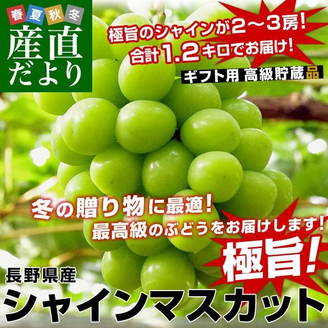 送料無料 長野県産 シャインマスカット ギフト用 高級貯蔵品 合計1.2キロ(2から3房入り)ぶどう 葡萄 市場発送 産直だより