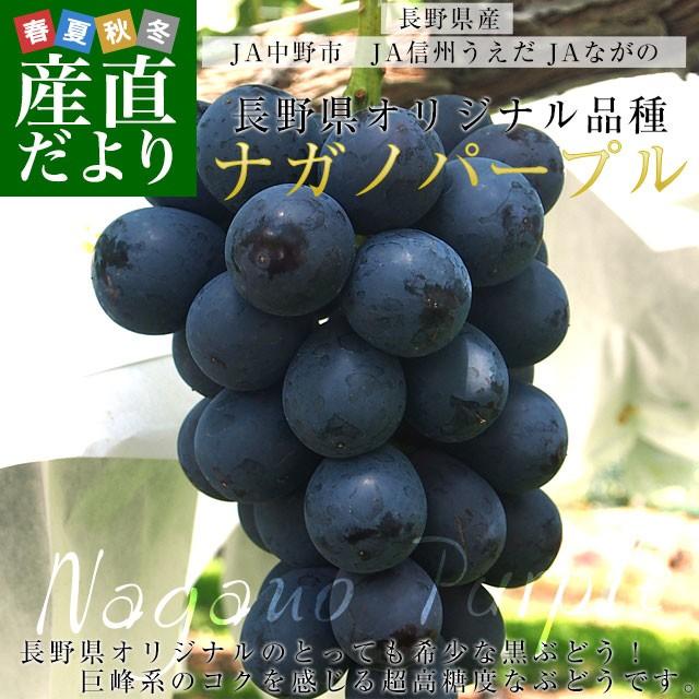 長野県産 ナガノパープル 合計1.2キロ(2房から3房) ぶどう 葡萄 送料無料 ※クール便 産直だより