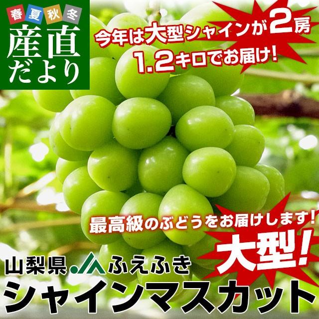 山梨県産 シャインマスカット 1.2キロ (大房2房) 送料無料 ぶどう 葡萄 種無し 皮ごと 話題のぶどう