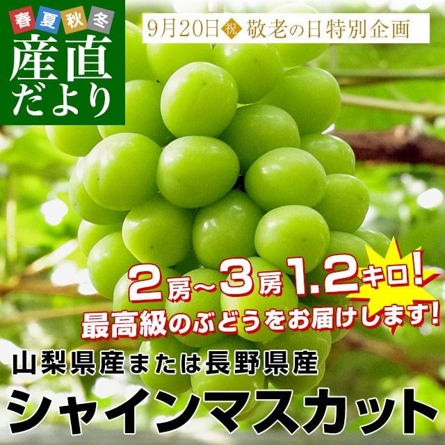 山梨県または長野県産シャインマスカット1.2キロ(2房から3房)送料無料 ぶどう 葡萄 種無し 皮ごと
