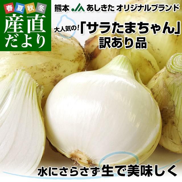 熊本県より産地直送 JAあしきた サラたまちゃん 規格外 (訳あり品) 約10キロ 送料無料 玉葱 タマネギ サラ玉 さらたま さらタマ