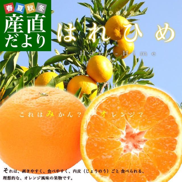 送料無料 愛媛県より産地直送 JAえひめ中央 はれひめ 2LからLサイズ 5キロ (28玉から43玉) オレンジ 柑橘 みかん ハレヒメ 産直だより