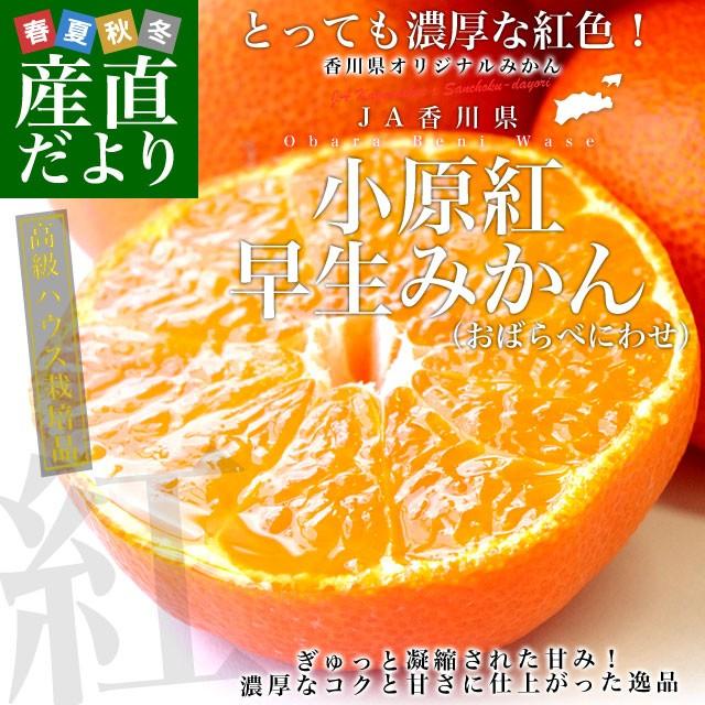 送料無料 香川県より産地直送 JA香川県 高級ハウス栽培 小原紅早生みかん 1.2キロ(10から15玉入) 蜜柑 ミカン 産直だより