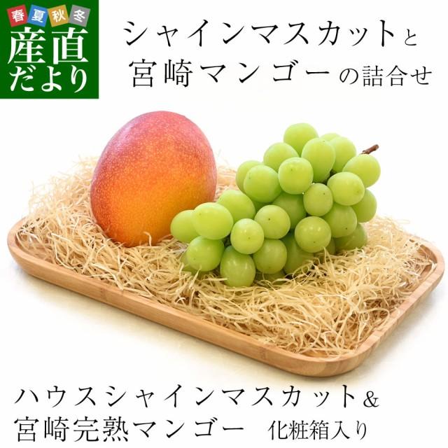 シャインマスカットと宮崎マンゴー 詰合せフルーツセット 化粧箱入り ぶどう まんごー 送料無料 お中元ギフト 産直だより plus