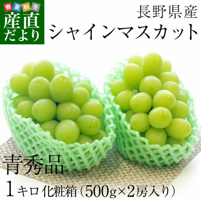 送料無料 長野県産 シャインマスカット 青秀品 500g×2房 化粧箱 ぶどう ブドウ 産直だよりplus