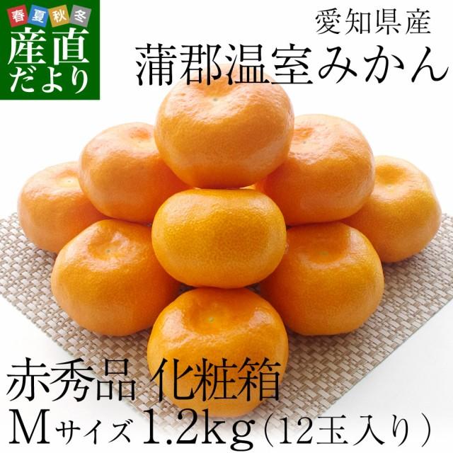 愛知県産 蒲郡温室みかん Mサイズ 1.2キロ化粧箱 (12玉入り) 送料無料 蜜柑 ハウスみかん 産直だよりplus