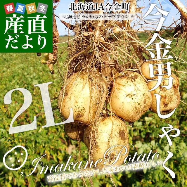 北海道産 JA今金町 じゃがいも 今金男爵 2Lサイズ 10キロ 馬鈴薯 ジャガイモ 芋 送料無料 ※市場スポット