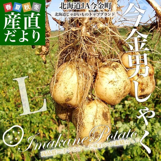 北海道産 JA今金町 じゃがいも 今金男爵 Lサイズ 10キロ 馬鈴薯 ジャガイモ 芋 送料無料 ※市場スポット 送料無料