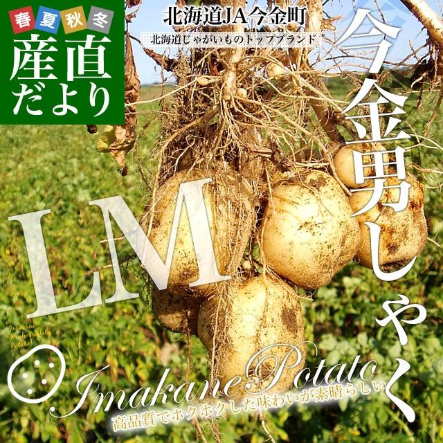 北海道産 JA今金町 じゃがいも 今金男爵 LMサイズ 10キロ 馬鈴薯 ジャガイモ 芋 送料無料 ※市場スポット 送料無料