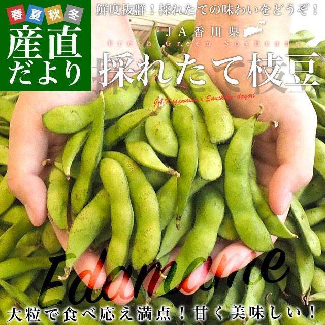 香川県より産地直送 JA香川県 食感がよい大粒の枝豆 たっぷり2キロ 送料無料 えだまめ エダマメ ※クール便 産直だより