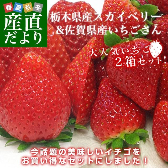 大人気いちご2箱セット (栃木県産スカイベリー600gと佐賀県産いちごさん540g)送料無料イチゴ 苺 大田市場発送 産直だより