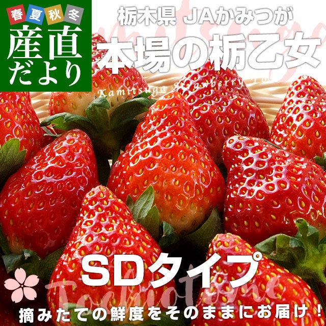 栃木県より産地直送 JAかみつが 本場の栃乙女 SD 320g×2P (12粒から15粒×2P) いちご イチゴ 苺 送料無料 上都賀 産直だより