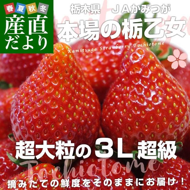 栃木県より産地直送 JAかみつが 本場の栃乙女 3L超級の超大粒 1キロ (12粒から15粒×2P) いちご イチゴ 苺 送料無料 上都賀 産直だより
