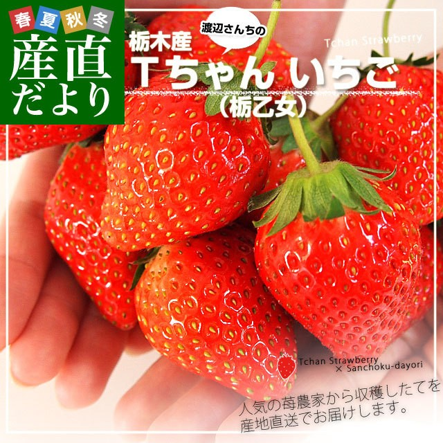 送料無料 栃木県より産地直送 渡辺さんちのTちゃんいちご(栃乙女) 350g以上×2パック 3Lサイズ(9から15粒×2P) 苺 イチゴ ストロベリー