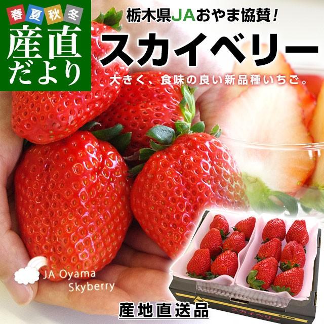 栃木県より産地直送 JAおやま スカイベリー 約300g×2P(6から12粒×2P) 送料無料 いちご イチゴ 苺 ※クール便発送 産直だより