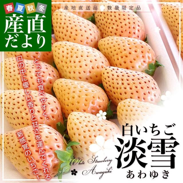送料無料 熊本県より産地直送 熊本県玉名市 白いちご 淡雪(あわゆき) Lサイズ以上 約540g(270g×2P(11から15粒×2)) 苺