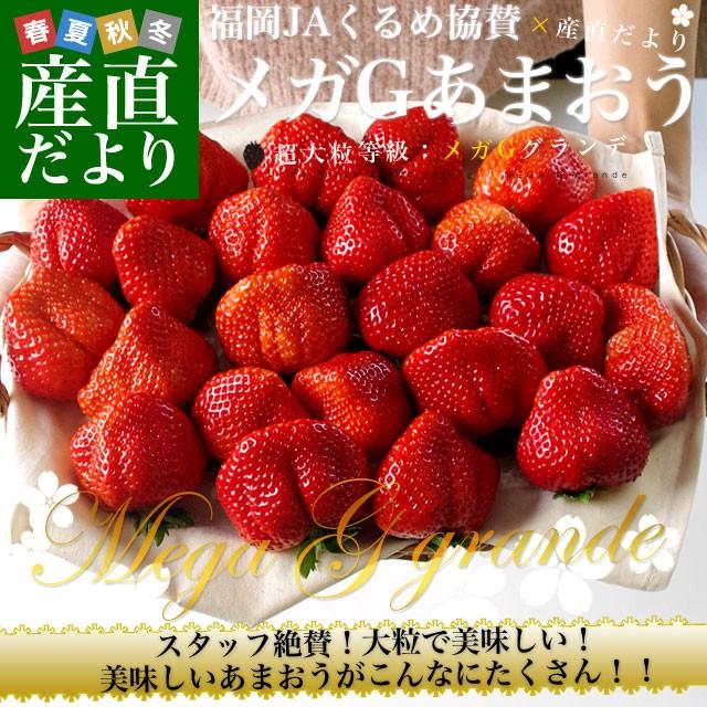 福岡県より産地直送 JAくるめ メガGあまおう 超大粒メガGグランデ 2箱セット 合計1080g (540g×2箱) 苺 いちご イチゴ 久留米 送料無料