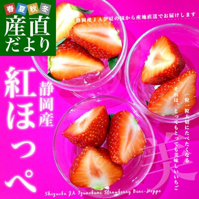 静岡県より産地直送 JA伊豆の国 紅ほっぺ DX 約560g (280g×2P) 送料無料 いちご イチゴ 苺 ※クール便発送 産直だより