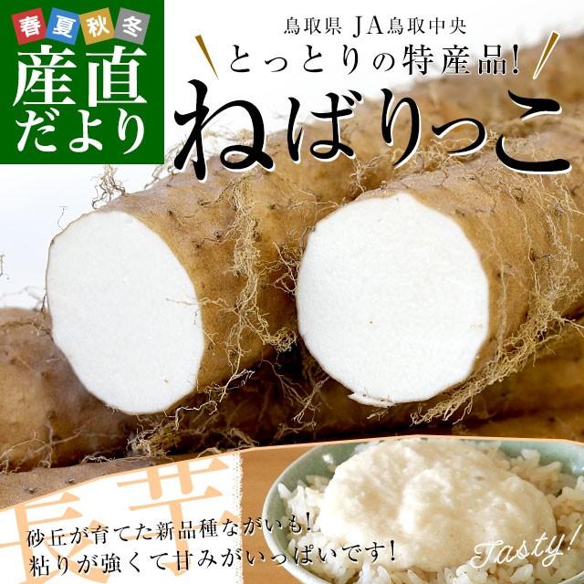 鳥取県より産地直送 JA鳥取中央 とっとりの特産品 新品種ながいも「ねばりっこ」(800g以上×3本入り) 送料無料 ナガイモ 長芋 とろろ